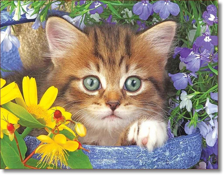 Garden Kitten Helper - Puzzles to Remember