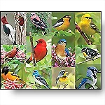 Birds of a Feather, 36-Piece Puzzle