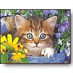 Garden Helper Kitten, 36-Piece Puzzle